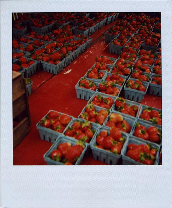 may18: strawberries