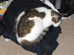 My Sweatshirt
