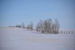 Winter on the Prairies (jessica.rohrbacher) Tags: winter fence trees horizion field parallel prairie canada