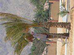 Sharm_El_Sheikh 180 (Large) (tsay) Tags: egypt sharmelsheikh naamabay