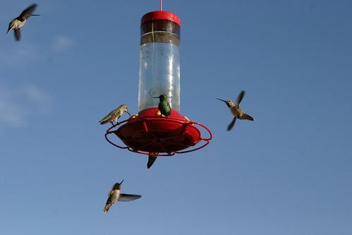 bird war