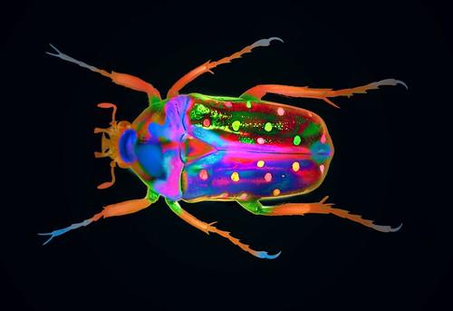 Coleoptera 1