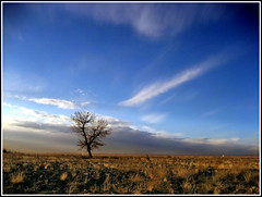 whisper (Alizadeh100) Tags: blue autumn red sky cloud white cold tree nature contrast landscape freedom warm whisper alone air free fresh land mashhad