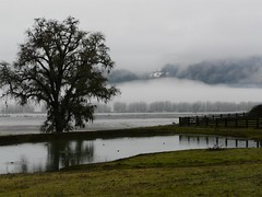Persico Ranch Pond & Fog (judi berdis) Tags: snow tree fog pond nca willits mendocinocounty littlelakevalley treesubject