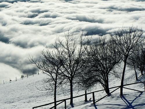 Alberi E Nuvole - Colli San fermo