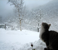 I believe in Heaven! (Xena*best friend*) Tags: winter italy pet cats snow cold ice fur frozen chats furry kitten feline alice tiger prayer freezing kitty kittens piemonte gato gatto katzen feral canondigitalixus50 bej mywinners piedmontitaly bestofcats anawesomeshot impressedbeauty betterthangood hsuspets boc0108 explorejan52008467