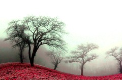 MISTY DREAMS... (Weirena) Tags: life trees colour art love nature colors misty forest landscape landscapes nikon moments poetry colours searchthebest crystal spirit magic dream foggy fantasy zen soul dreams mystical wisdom poems universe emotions tao soe breathtaking specialeffects smrgsbord flickrsbest 35faves goldenmix golddragon abigfave platinumphoto anawesomeshot infinestyle treesubject diamondclassphotographer frhwofavs theunforgettablepictures brillianteyejewel betterthangood proudshopper theperfectphotographer thegoldendreams goldstaraward fdream life~asiseeit llovemypic oraclex saariysqualitypictures obramaestra