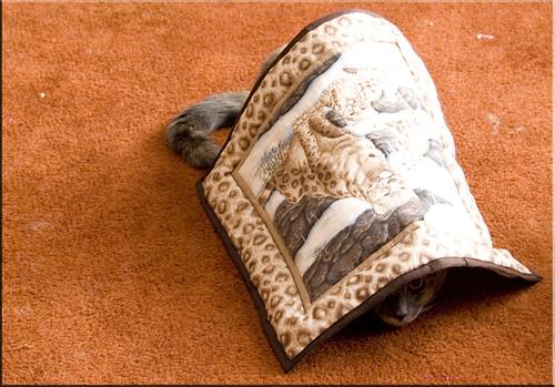 Merry Blanket