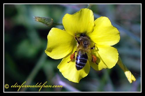 Recolectando miel