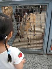 20080410-yo與羊-12