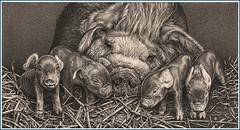 'Motherhood' - Pot Bellied Pigs - Fine Art Pencil Drawing  www.drawntonature.co.uk (kjhayler) Tags: pictures baby animals print piggy pig photo big babies photos farm picture naturalhistory litter pigs prints porky swine piglet hog livestock boar farmanimal sow farmanimals boars piglets babypig hogs porker sows animalart wildpig wildanimals pigsty animalprints potbellypig wildboar potbelliedpig wildpigs farmyard drawingpictures animalpictures potbellypigs wildlifeart animalscats babypigs farmyardanimals wildboars potbelliedpigs animalphotos animaldrawings wildlifeartists naturepictures pigpicture animalspigs wildlifeportraits animalspictures domesticpigs pigphotos openedition farmpigs animalpigs drawingphotographs kevinhayler pigletpictures photospigs pigphotographs piglitter pigpictures pigspictures picturespigs picturepigs picturepiglets pigphoto