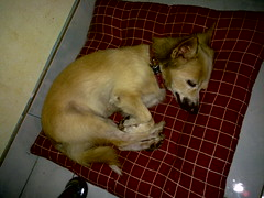 My dog, Judy