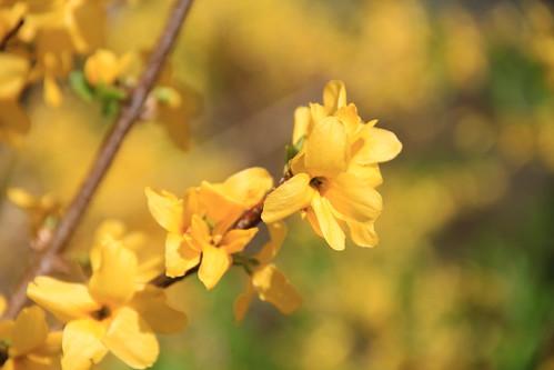 Yellow Flowers 02