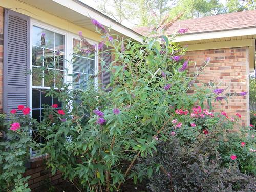 Khu vườn của Na - Page 5 5803921125_cdddce5ca5