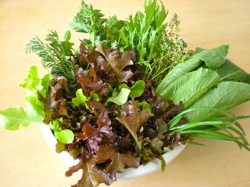 harvest - baby lettuce, rosemary, oregano, mizuna, thyme, komatsuna, garlic chives