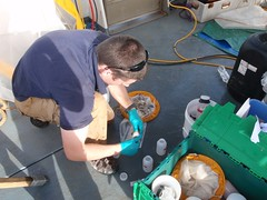 Processing Marine Ecological Samples, Persian Gulf