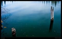 Pier Stumps (justpedalhard) Tags: autumncolors tranquil glenmore weaselhead ef1740mmf4l riverflow canonllens canonrebelxti400d adobelightroomlr michaelilogatoc pierstumps