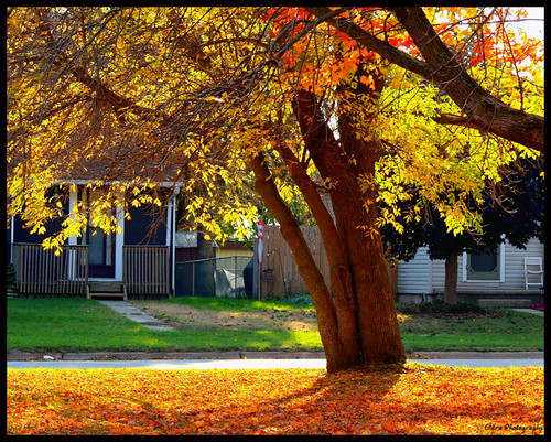 Ontario Fall