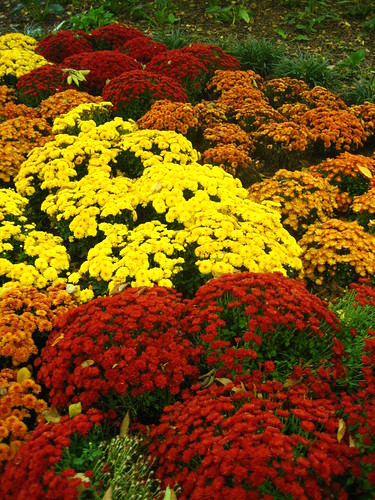 more mums
