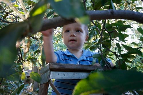 Apple Picking 15