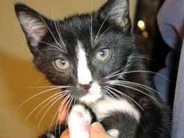 Kinship Circle - 2007-10-29 - 01 - Extermination Of JFK Airport Cats