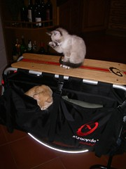 My cats & the Xtracycle