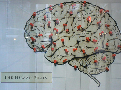 the human brain by justine warrington, on Flickr