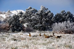 Deer in the Garden (iceman9294) Tags: bravo colorado picasa gardenofthegods coloradosprings chriscoleman naturesfinest notphotoshop paintnet iceman9294