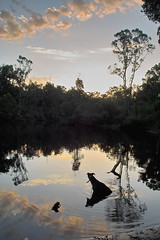 swimming hole (dalinean) Tags: sunset sky dog water clouds swimming photography shots sigma ripples waterhole sd10 outstanding outstandingshots passionphotography mywinners isawyoufirst