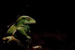 Hello (tammyjq41) Tags: frog soe supershot avision nationalgeograpic impressedbeauty