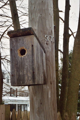 Birdhouse in your soul