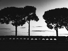 InViaggio (_My Hero Is Gone_) Tags: travel trees sunset rome roma tree silhouette amazing cool shadows awesome bn ombre ponte acquedotto allyouneedislove welltaken bwdreams 10faves naturessilhouettes altraroma
