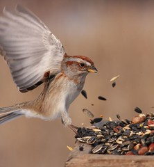 Buffet for the birds. (naturelover2007) Tags: ontario tree bird nature fauna american sparrow magicmoments birdwatcher naturesfinest blueribbonwinner supershot featheryfriday animaladdiction golddragon avianexcellence wowiekazowie diamondclassphotographer flickrdiamond naturewatcher slrcanon40d