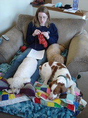 puppy knitting