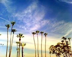 some palms.