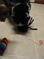 Fuzzy spider and catnip sock