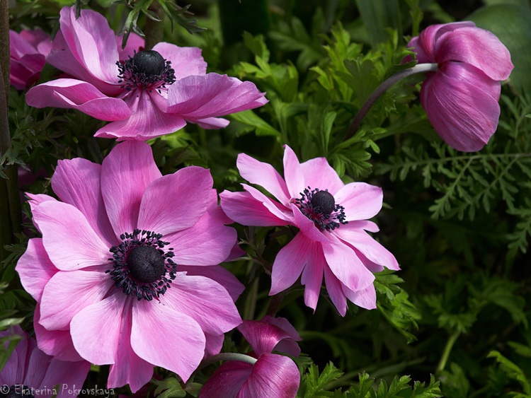 spring_flowers_12