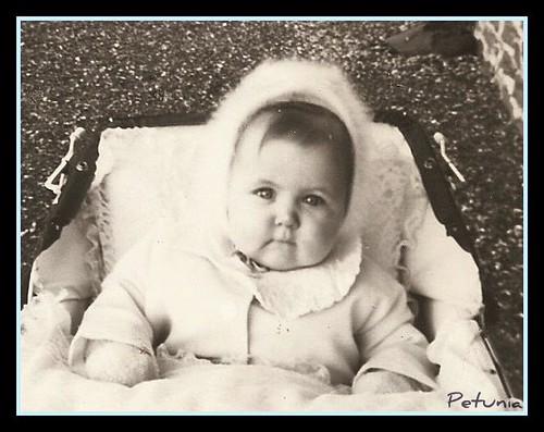 Petunia anno 1965