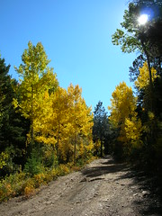 Roadside Aspen Photo
