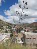 Plant picture above the city. (Tim Kiser) Tags: 2015 20151009 agave arizona arizona80 arizonahighway80 arizonaroute80 arizonastateroute80 arizonalandscape bisbee bisbeearizona bisbeelandscape cochisecounty cochisecountyarizona highway80 img9793 october october2015 route80 statehighway80 stateroute80 us80 ushighway80 usroute80 agavedeathstalk agaveplant agavestalk buildings centuryplant clouds deadagave deadagaveflowers deadflowers deathstalk desertcity desertcitylandscape desertlandscape distantmountains downtown downtownbisbee dyingagave electriclines formerus80 formerushighway80 formerusroute80 landscape overheadelectriclines overheadpowerlines partlysunny powerlines scenicoverlook scenicoverlooklandscape southarizona southeastarizona southeasternarizona southernarizona urbanlandscape view viewfromascenicoverlook unitedstates