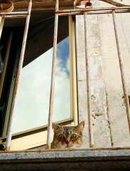 Vittime di stalker (J jeid) Tags: animali cat cats gatti felini animals