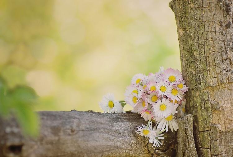 Kópia – kvet (7)