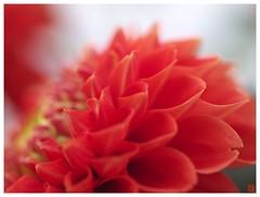 Flowers 071013 #02