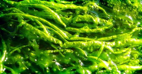 to chlorophyta returngreen