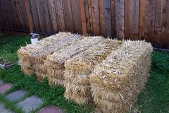A bale of straw backyard
