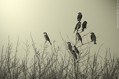 Unfamiliar (Ammar Alothman) Tags: blackandwhite bw bird nature birds animal animals canon wildlife kuwait ammar kuwaitcity kw 2007 q8 400mm markiii   vwc canoneos1dmarkiii ammaralothman  canonef400mmf56lusm kuwaitpictures kuwaitwildlife canon400 canon400mm kuwaitiphotographer kuwaitphoto kuwaitphotos ammarphotography kuwaitpic kuwaitpictrue whereiskuwait 1dmark3 kvwc kuwaitvoluntaryworkcenter  kuwaitvwc ammarq8com  ammarphotocom
