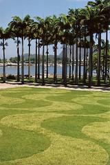 Aterro (Ana Paula J.) Tags: parque brazil rio brasil riodejaneiro garden coconut coco jardim paulinha aterro coqueiro diaadiadobrasileiro