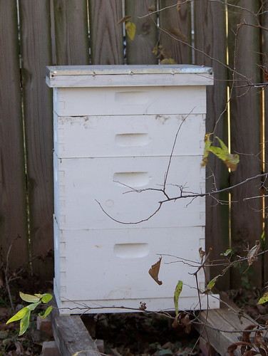 Bees in December 07