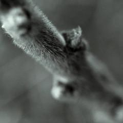 Fuzzy (sandelion) Tags: deleteme5 deleteme8 deleteme deleteme2 deleteme3 deleteme4 deleteme6 deleteme9 deleteme7 deleteme10 100