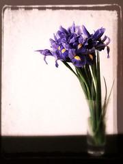 Vintage iris (tanakawho) Tags: iris plant flower glass yellow leaf stem purple bokeh livingroom clear vase vintageeffect tanakawho superbmasterpiece 2on2photooftheweek ispytwtme 2on2photooftheweekfebruary2008